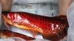 Bí ẩn cá huyết rồng được đại gia săn lùng