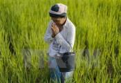 Thái Lan kêu gọi người dân dừng trồng lúa