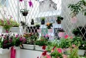 'Vườn thiên đường' tuyệt đẹp trong ngõ nhỏ giữa Hà Nội