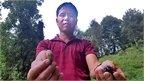 Ly kỳ cây trám Lạng Sơn độc nhất vô nhị , đại gia Trung Quốc bao trọn 10 năm