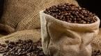 Giá cà phê hôm nay 17/10: Trên 37.000 đồng/kg