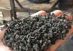 Vụ cà phê lõi pin: Kết quả xác minh từ Bộ Nông nghiệp